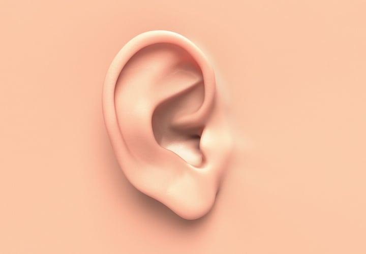 No hay dos orejas iguales